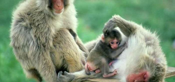 Maymunlar-800x600